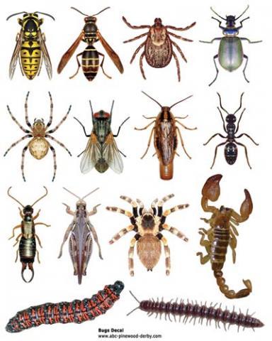 Bug taxonomy