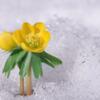 flower blooming in snow